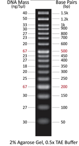 50bp DNA markers (0.5 ml, 100 loadings)