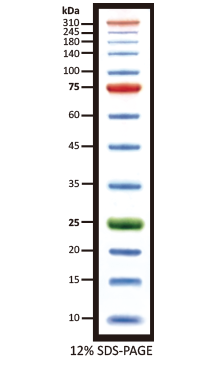 Tri-color Extra Range Protein Marker (10-310 kDa), 5x0.5ml