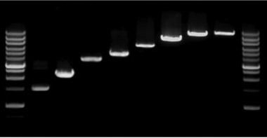 PowerScript Plus 1st Strand cDNA Synthesis Mastermix (25 RXN)