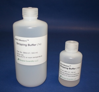 Multi-Western Stripping Buffer (10x, 100 ml)